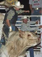 Annual Plum Creek Rodeo  in June